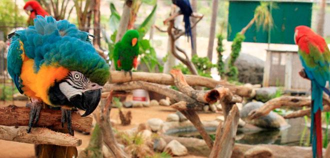 Krazy world, El zoo más grande del Algarve